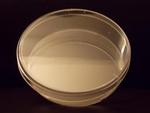 D210-8 Petri Dishes 100 x 25 mm